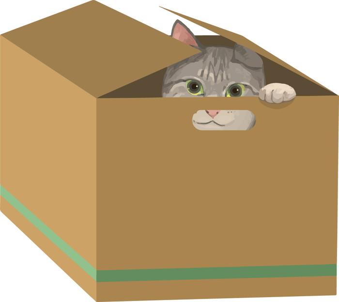 箱に入るネコ